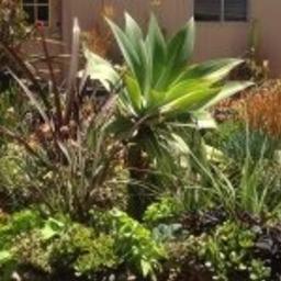 View Altman Specialty Plants